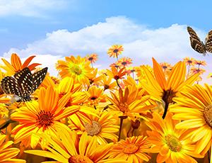 nature-landscapes_hdwallpaper_sunshine-bright_6592